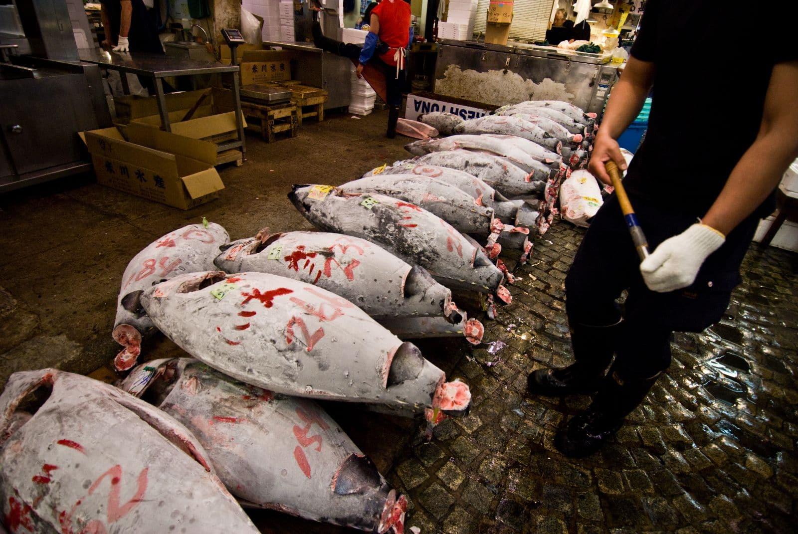 Fiskmarknaden Tsukiji
