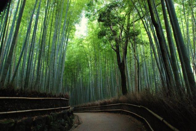Arashiyamas berömda bambulund