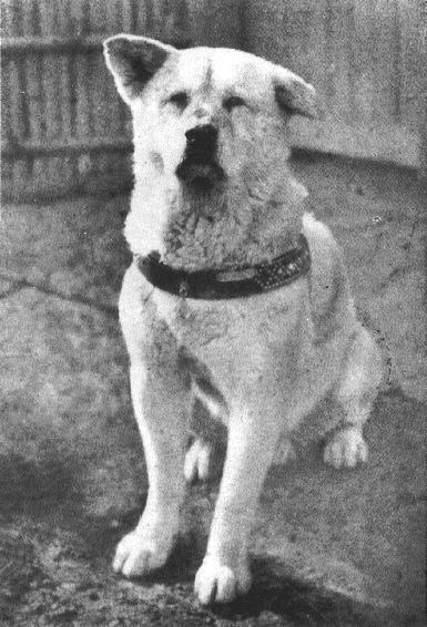 Hunden Hachiko