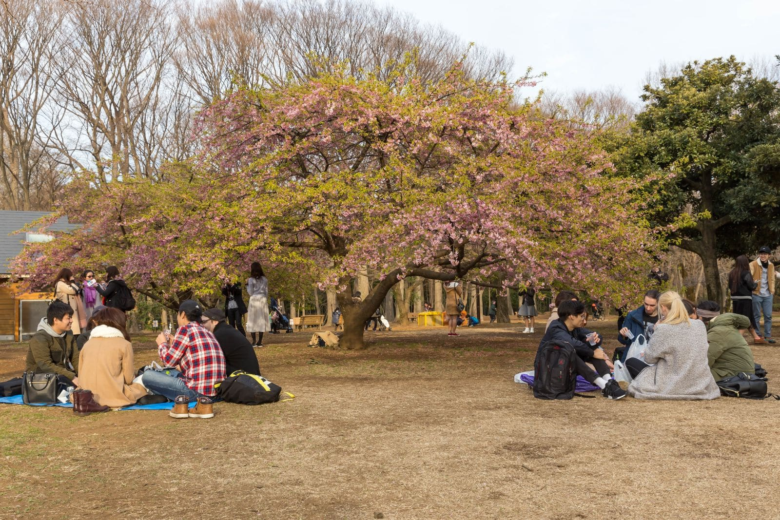 Picknick i Yoyogi Park Tokyo