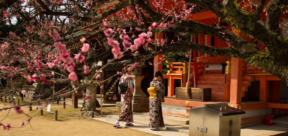 Japanska plommonträd